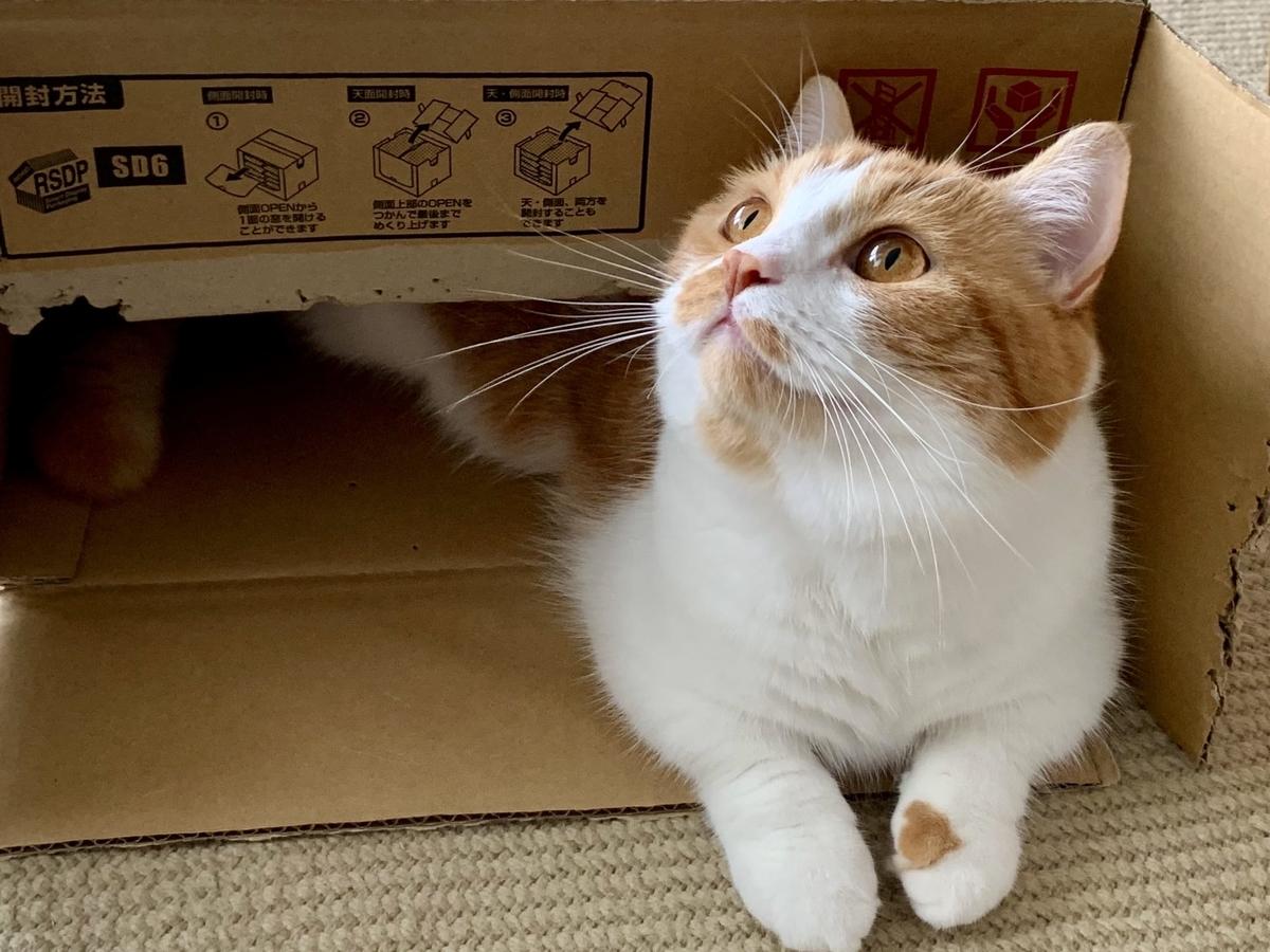 ご飯の箱に入るるるちゃん
