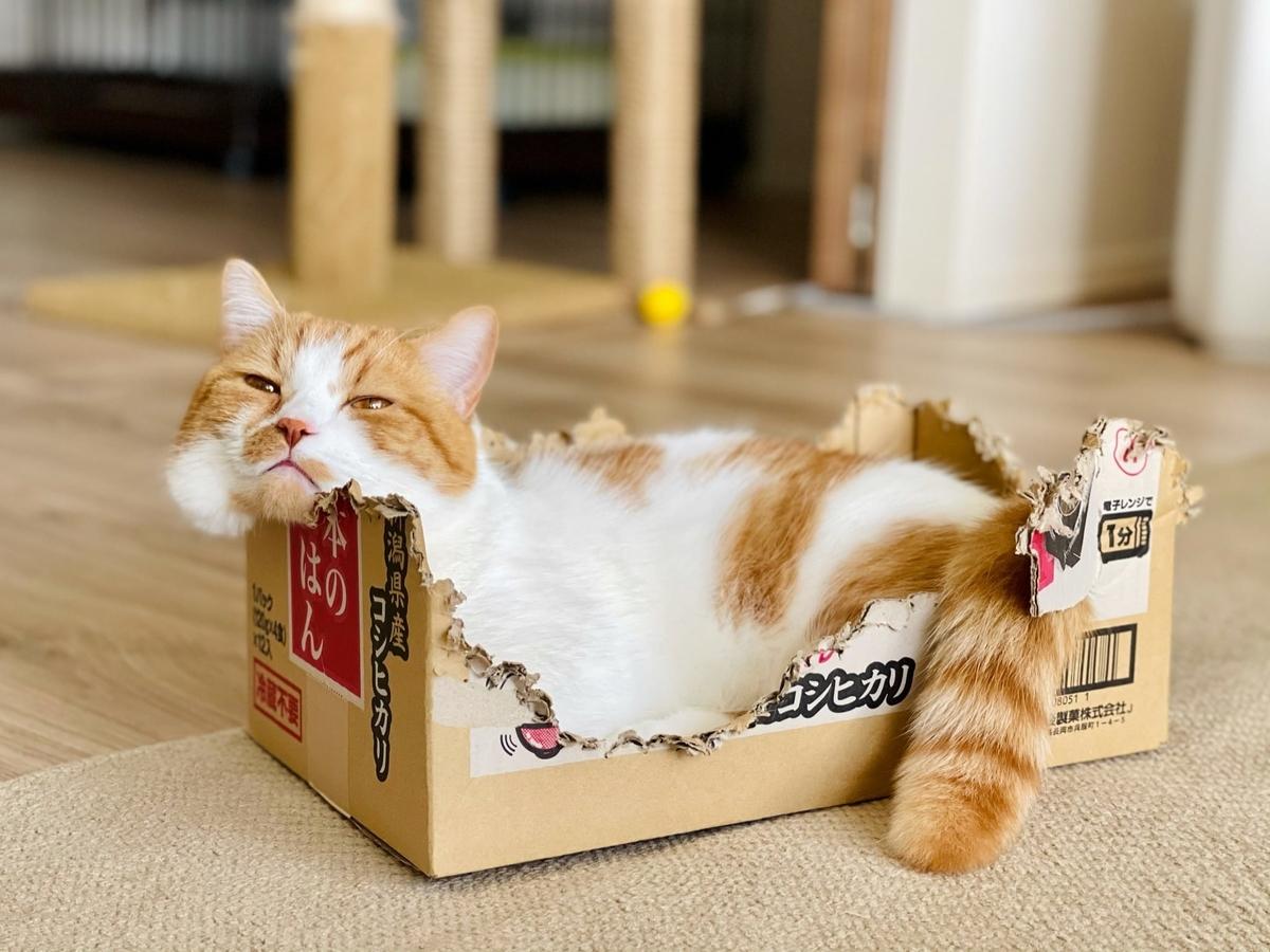 箱にぎゅうぎゅうに入るるるちゃん