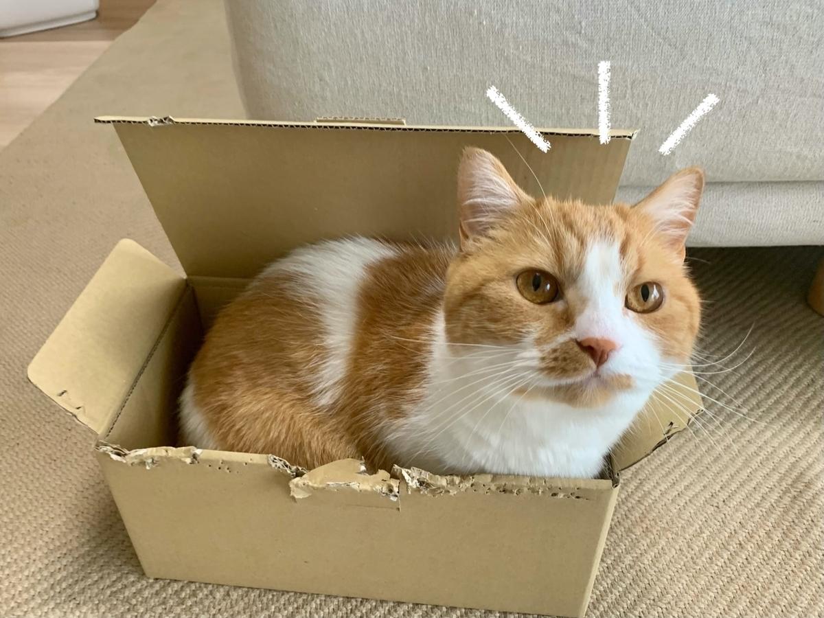 箱にすっぽりおさまるるるちゃん2