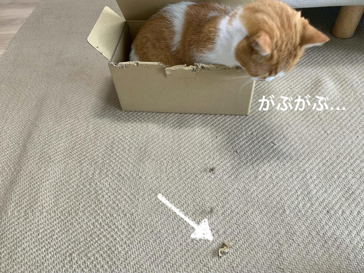 箱にすっぽりおさまるるるちゃん3