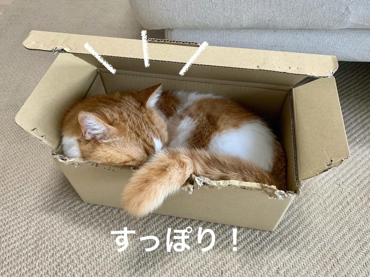 箱にすっぽりおさまるるるちゃん5
