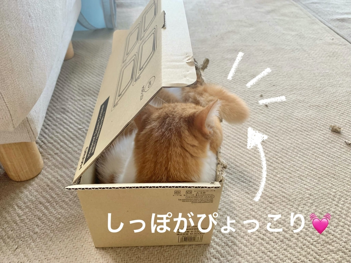 箱にすっぽりおさまるるるちゃん6