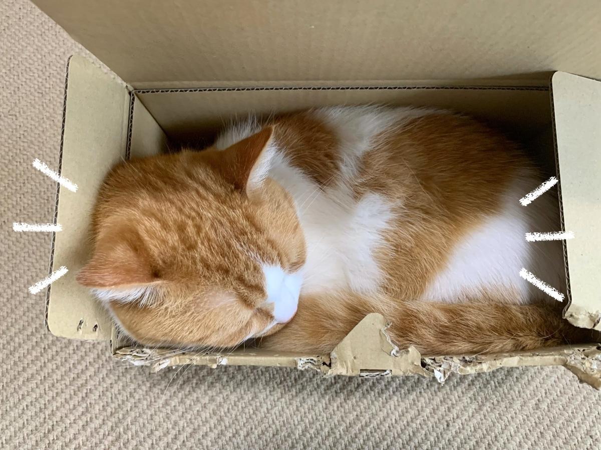 箱にすっぽりおさまるるるちゃん1