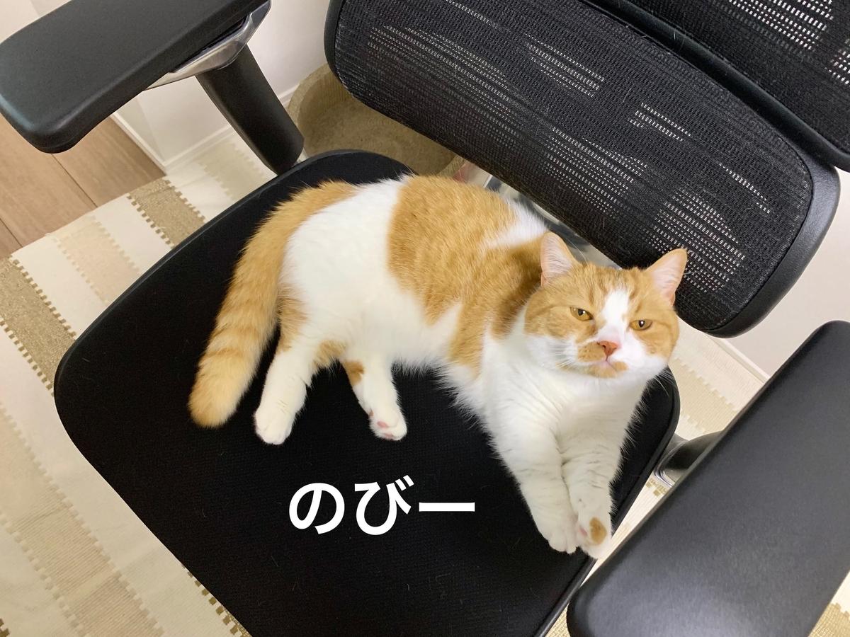 仕事椅子の上でくつろぐるるちゃん2