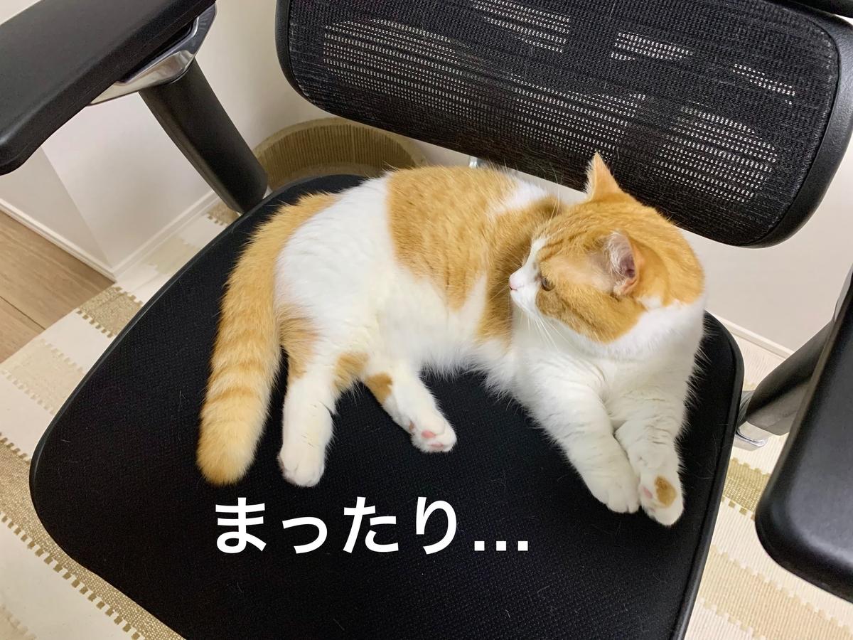 仕事椅子の上でくつろぐるるちゃん3