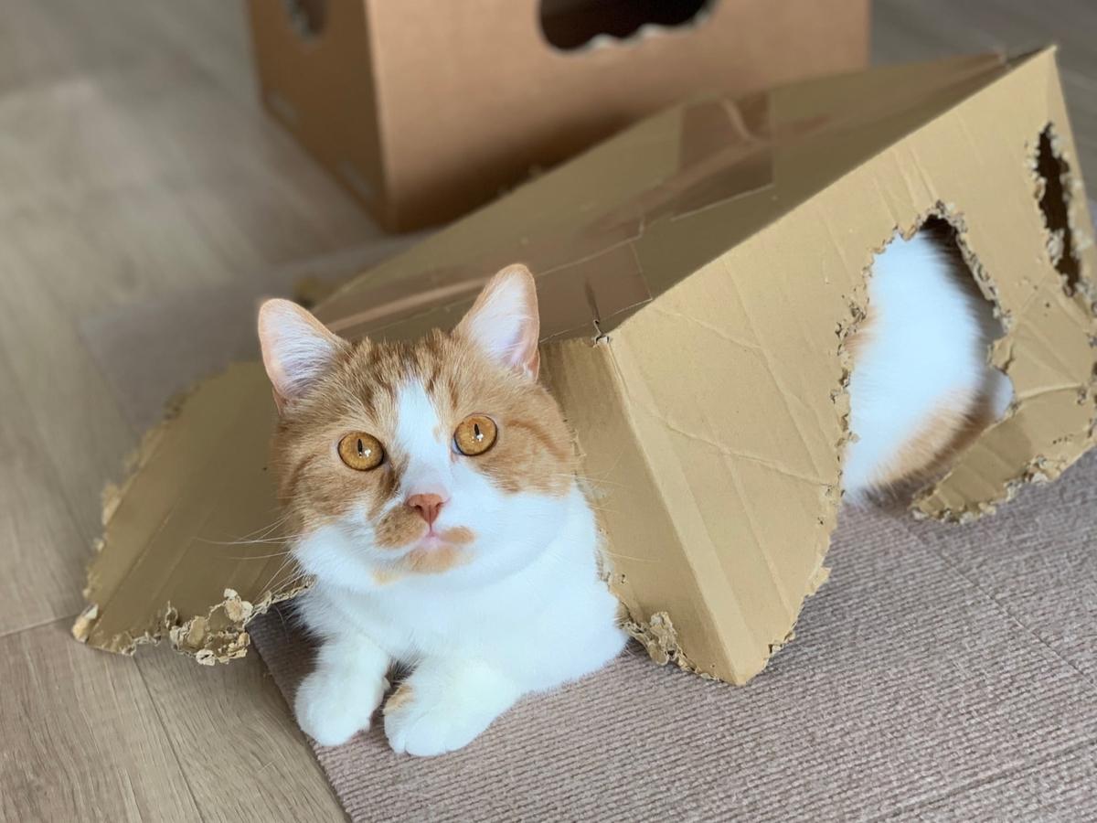 箱入り猫のるるちゃん1