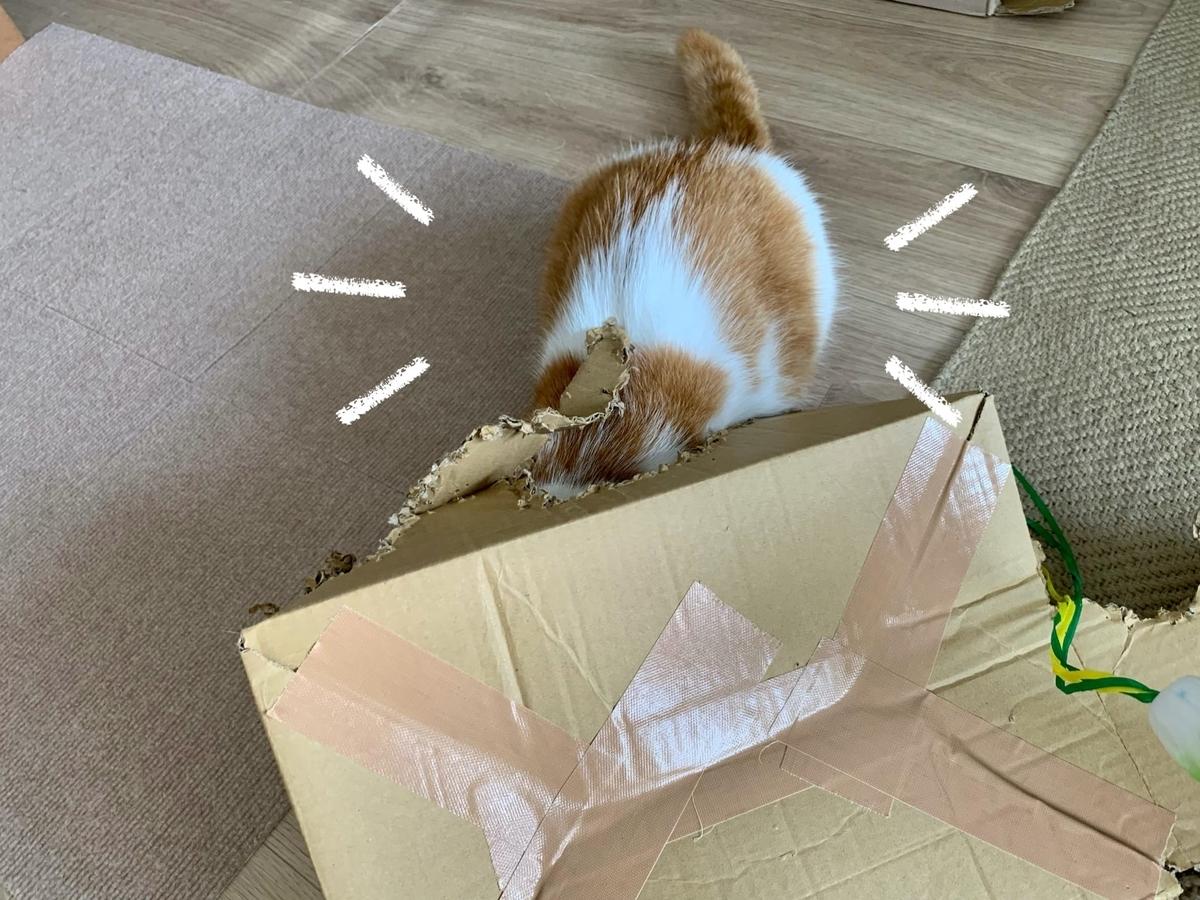 箱入り猫のるるちゃん3