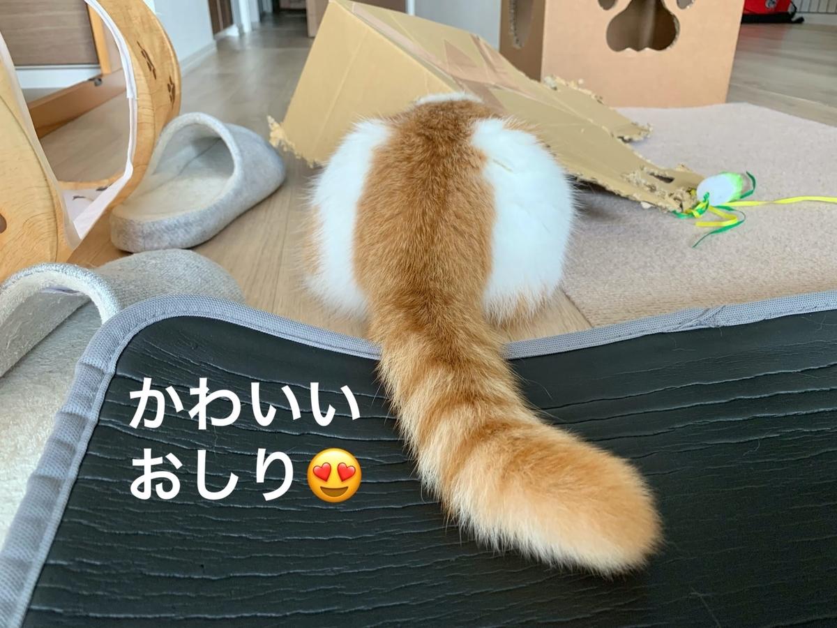 箱入り猫のるるちゃん4
