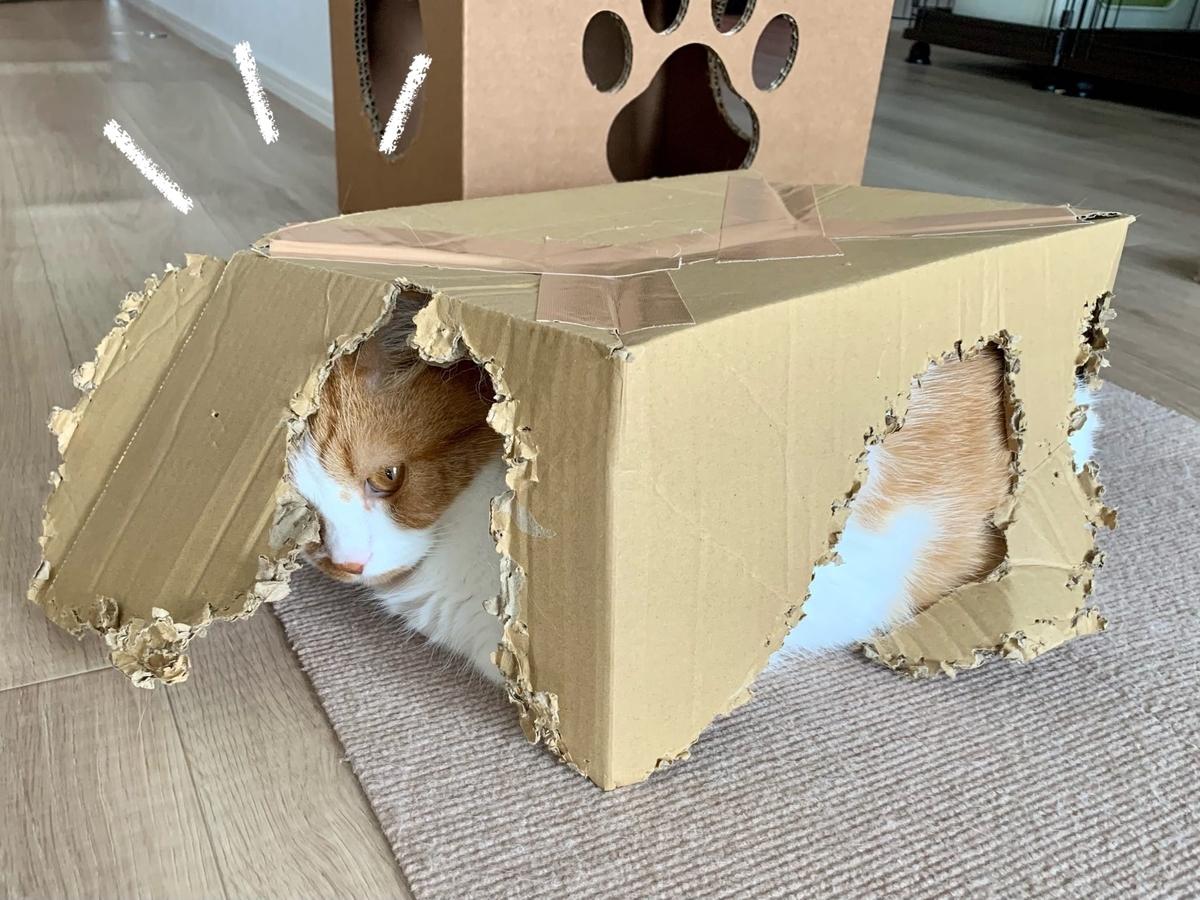 箱入り猫のるるちゃん2