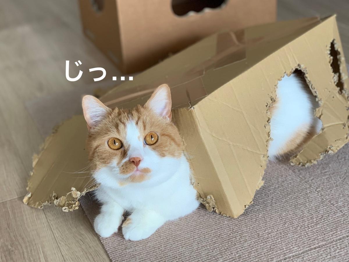 箱入り猫のるるちゃん5