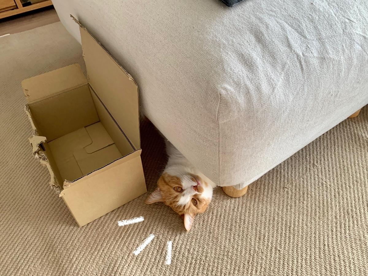 ソファの下に潜むるるちゃん1