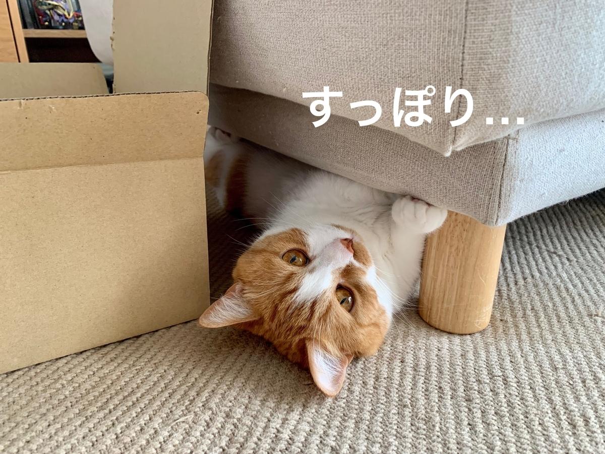 ソファの下に潜むるるちゃん2