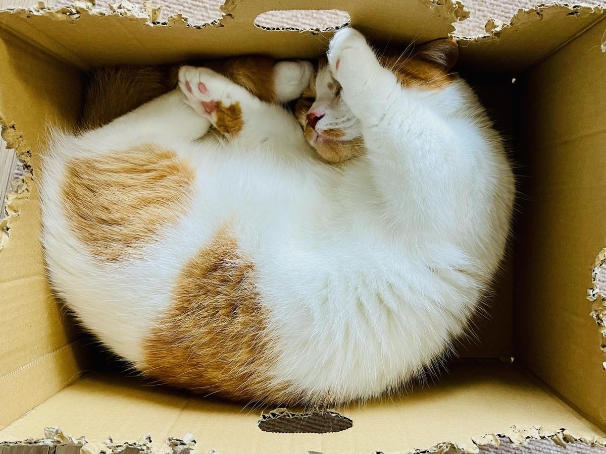 箱の中で眠るるるちゃん2