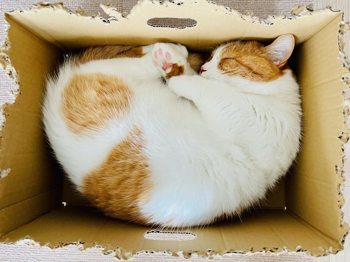 箱の中で眠るるるちゃん1
