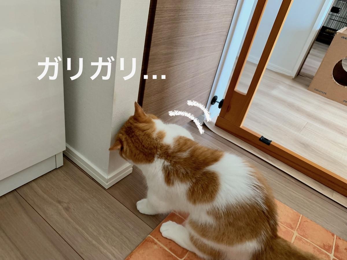 ご飯の棚を開けようとするるるちゃん1