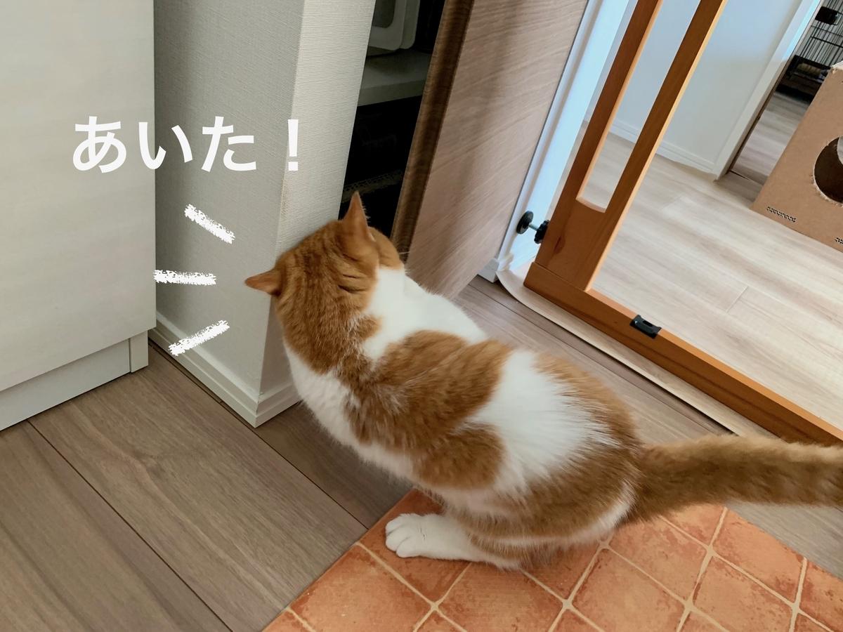 ご飯の棚を開けようとするるるちゃん2