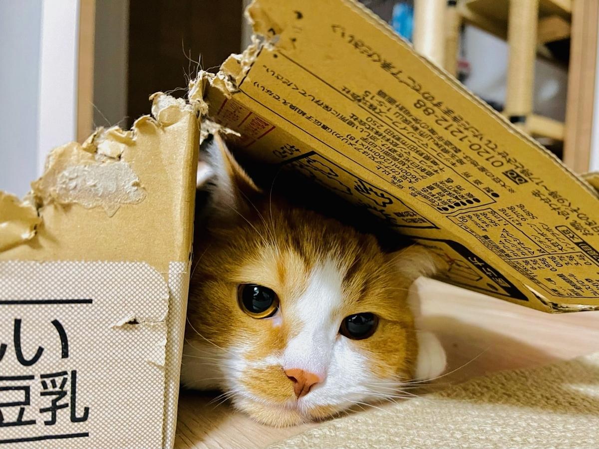 箱の隙間に隠れるるるちゃん