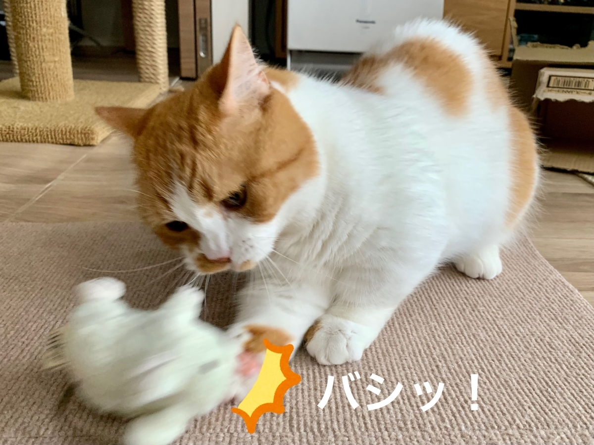 ねずみのおもちゃに猫パンチするるるちゃん