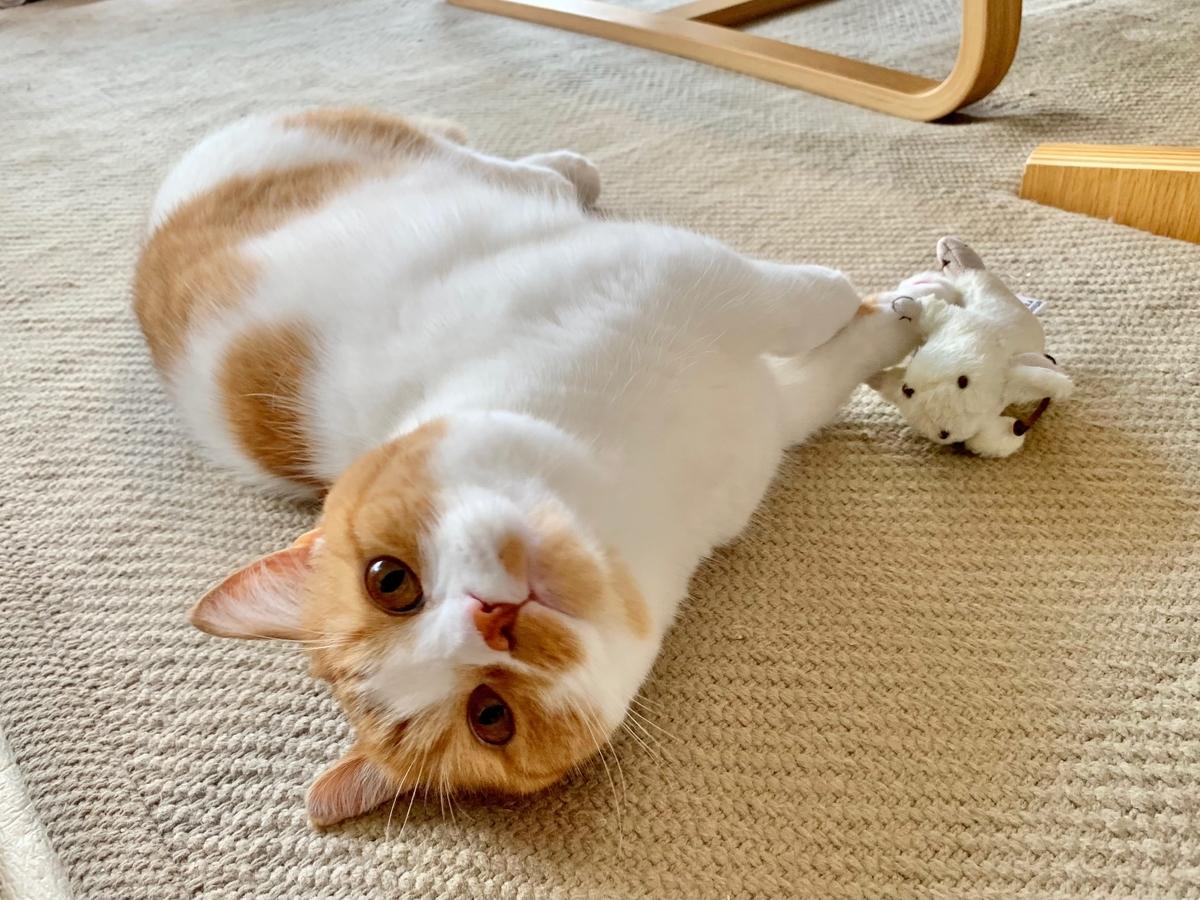 ねずみのおもちゃと添い寝するるるちゃん