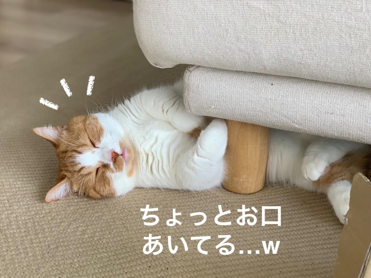 ソファの下でごろごろするるるちゃん1