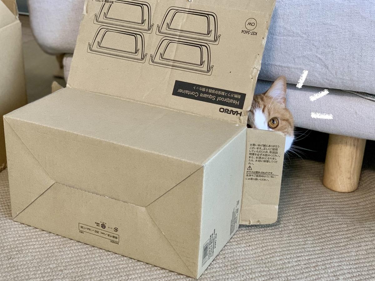 箱に隠れるるるちゃん