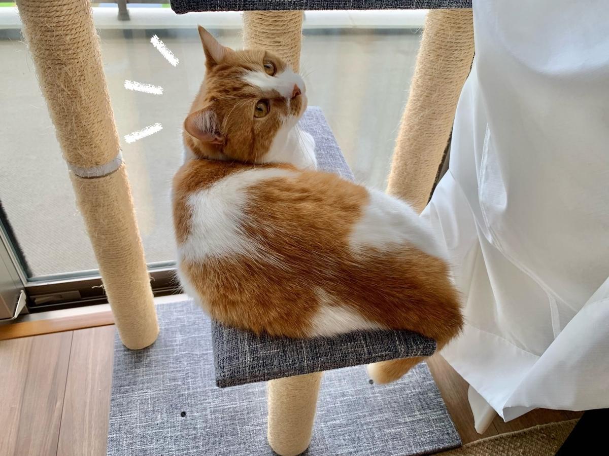 カーテンに囲まれたキャットタワーでお昼寝するるるちゃん2