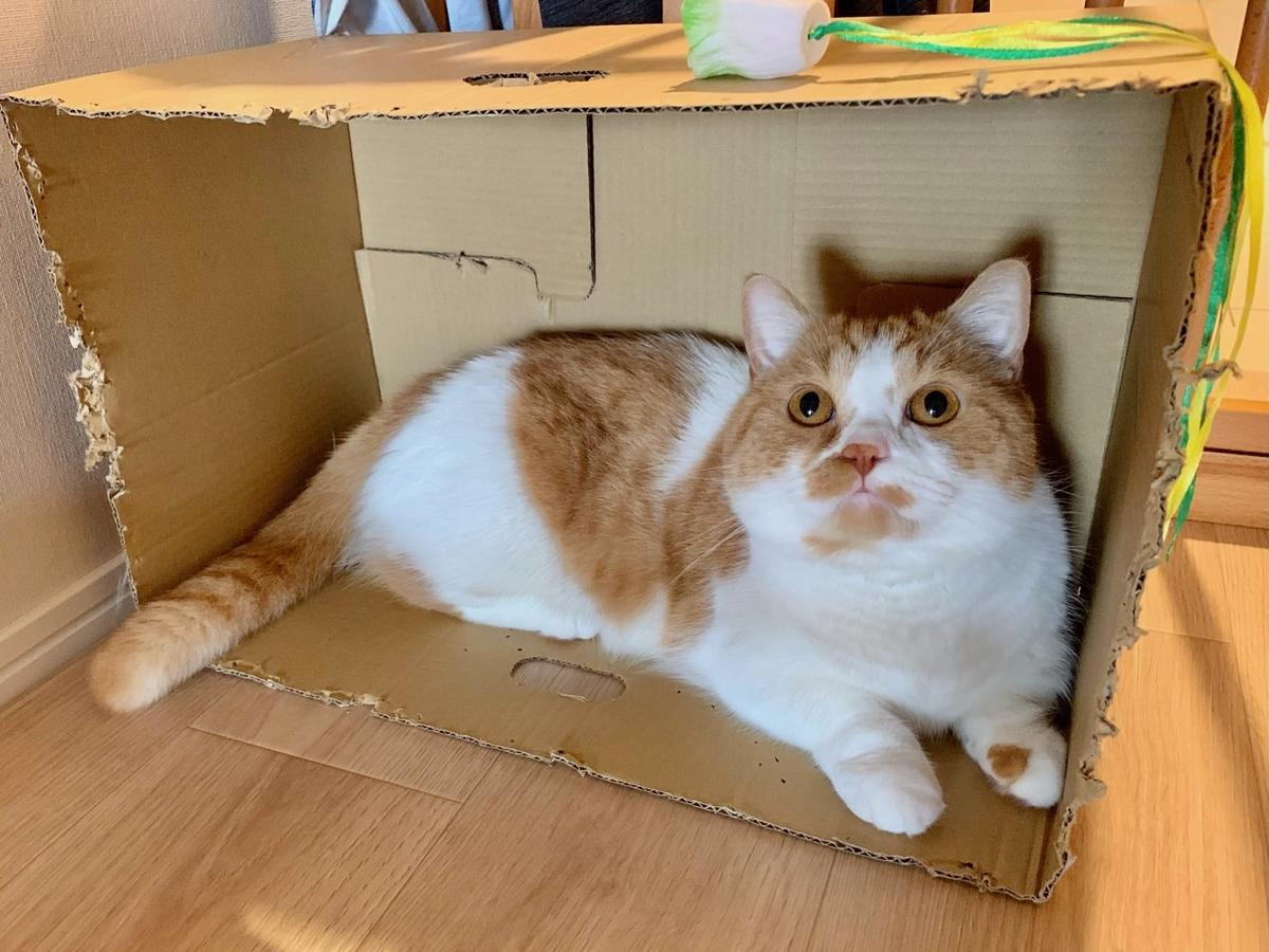 箱の中でくつろぐるるちゃん