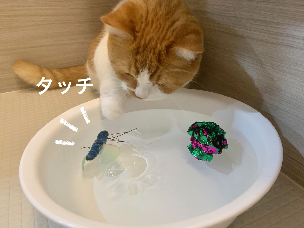 水に浮かべたおもちゃで遊ぶるるちゃん1
