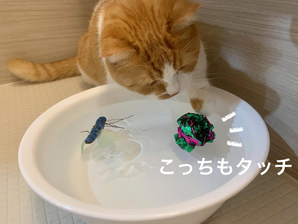 水に浮かべたおもちゃで遊ぶるるちゃん2