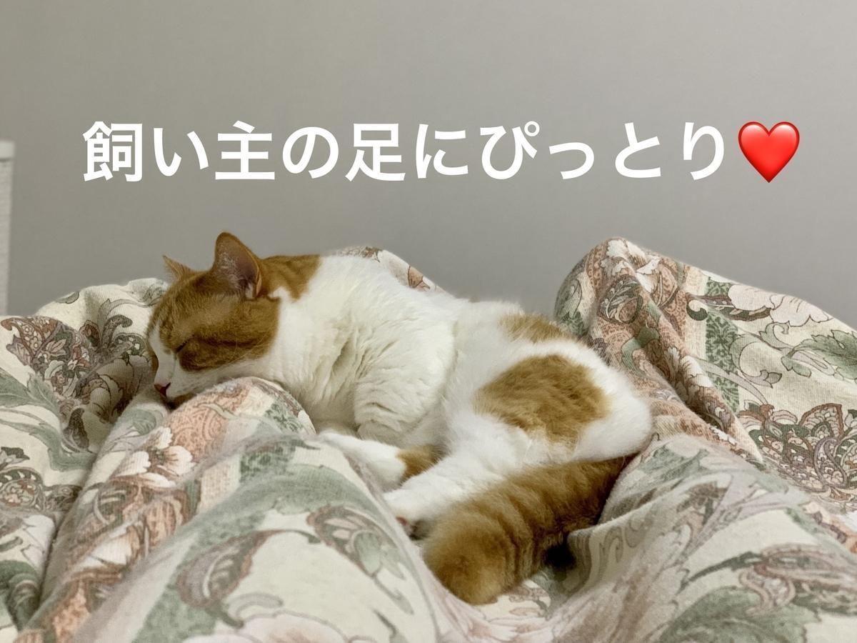 飼い主の足を枕にお昼寝するるるちゃん