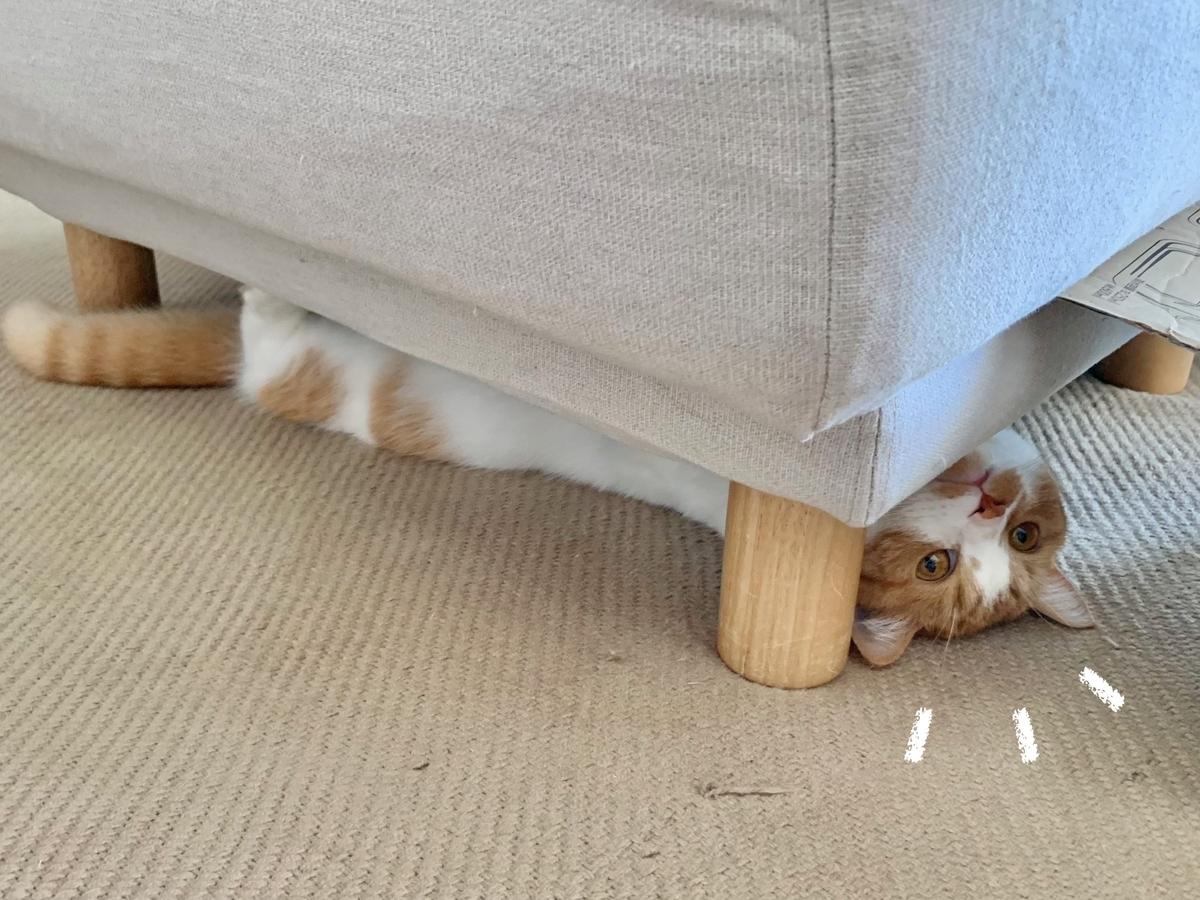 ソファの下のるるちゃん1