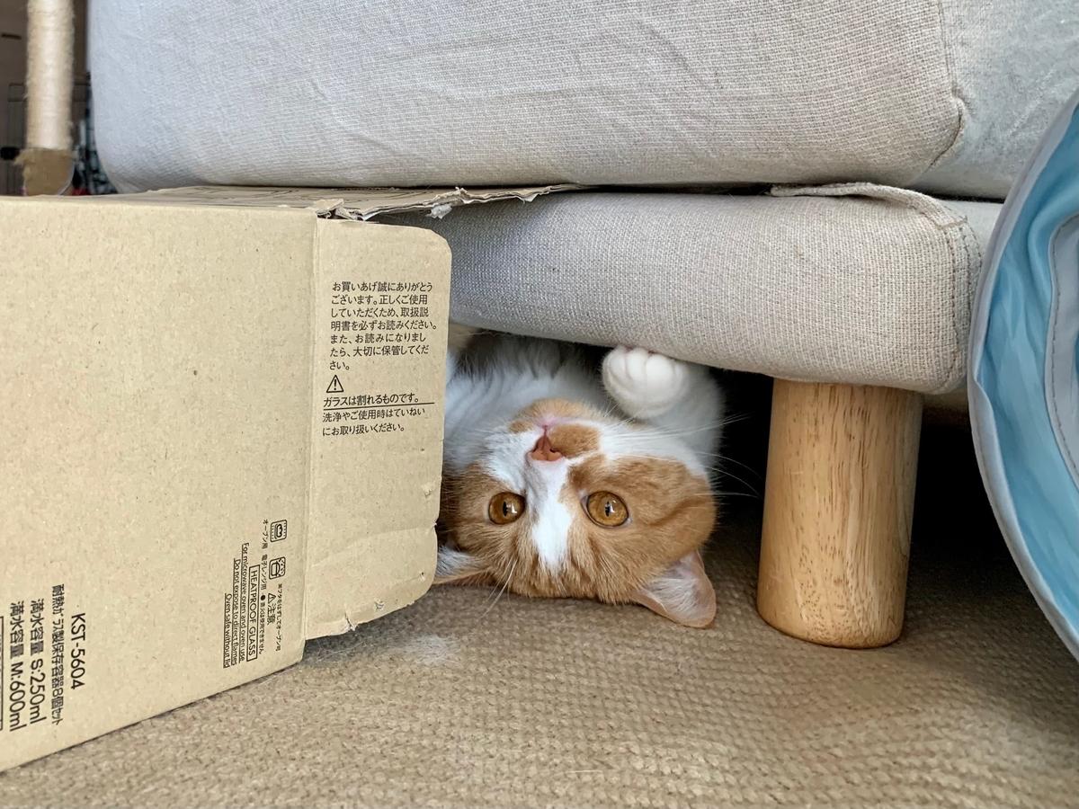 ソファの下のるるちゃん2