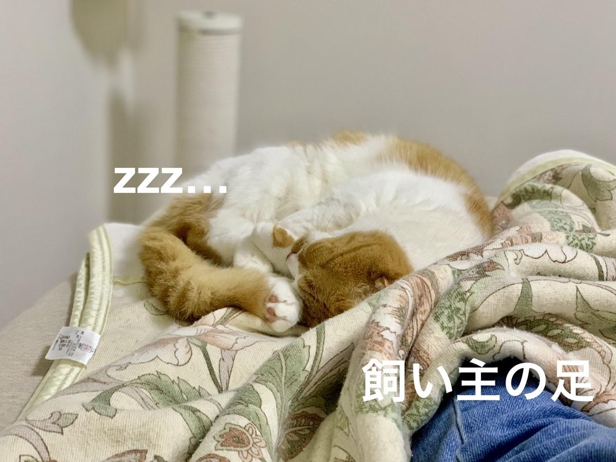 飼い主に添い寝するるるちゃん2