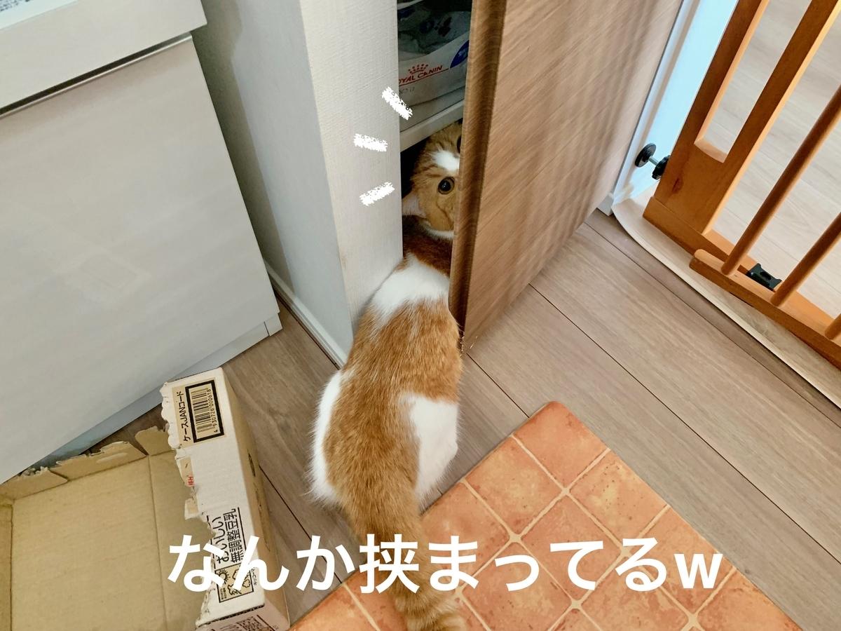 棚からご飯を取り出するるちゃん1