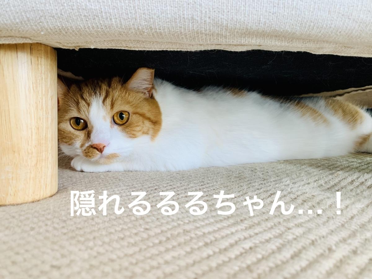 ソファの下に隠れるるるちゃん