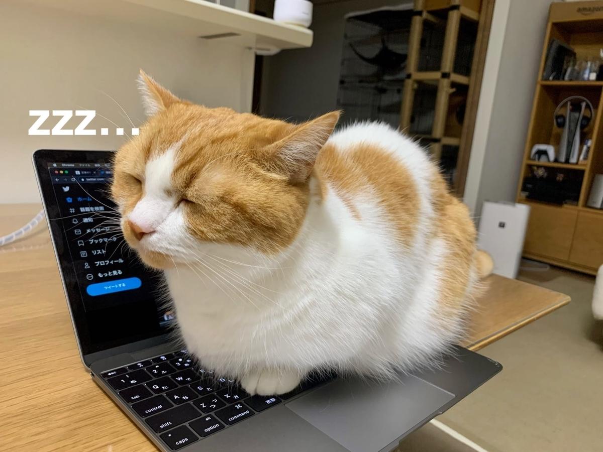 パソコンの上でまったりするるるちゃん1