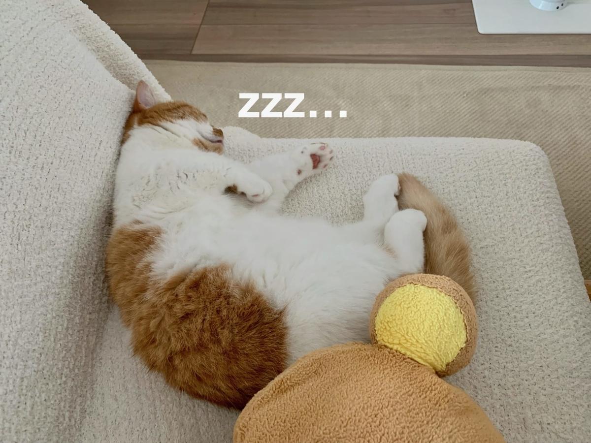 ダイニングソファでお昼寝中のるるちゃん