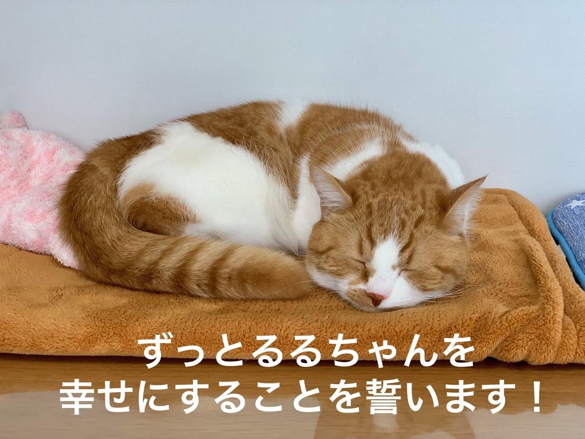 幸せそうな寝顔のるるちゃん