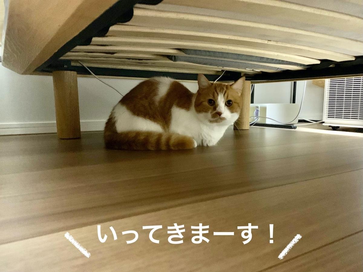 ベッドの下に隠れるるるちゃん1