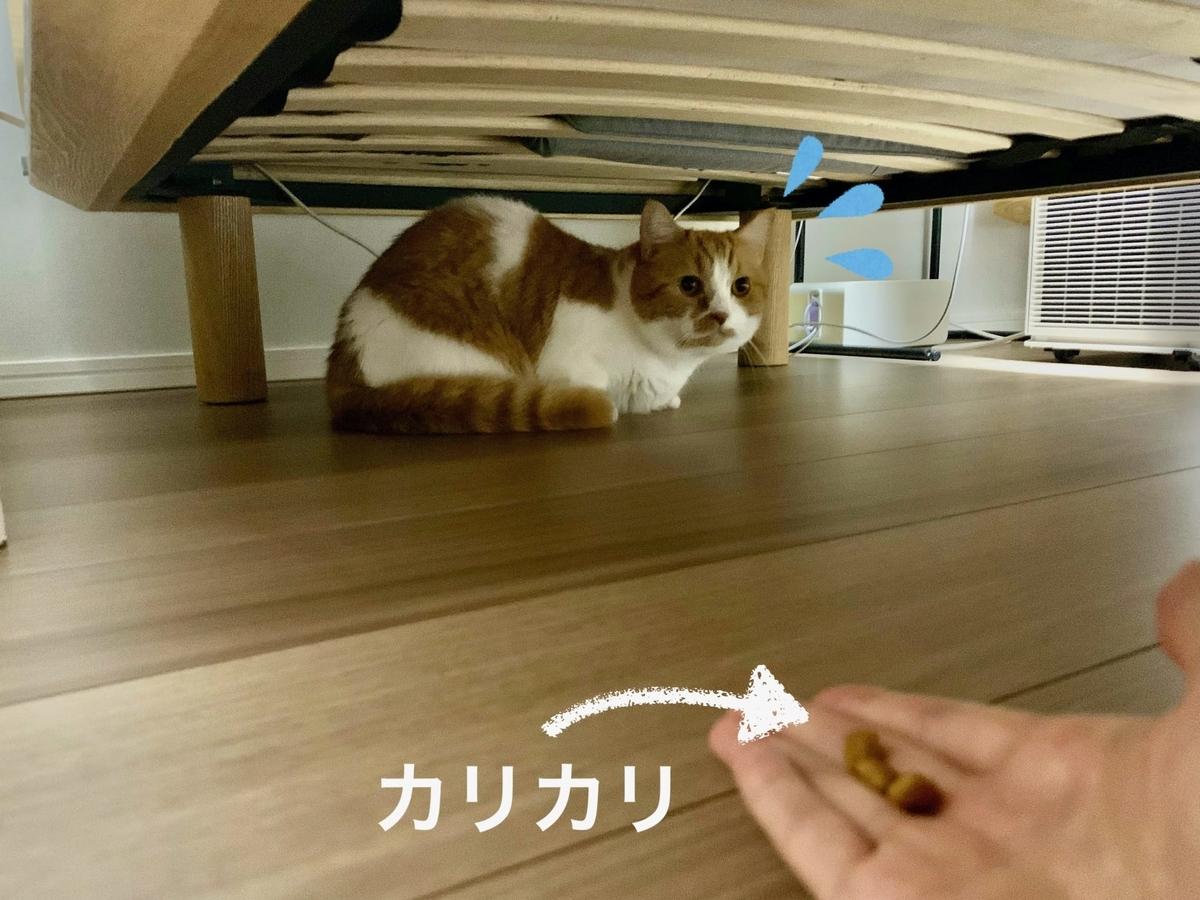 ベッドの下に隠れるるるちゃん2