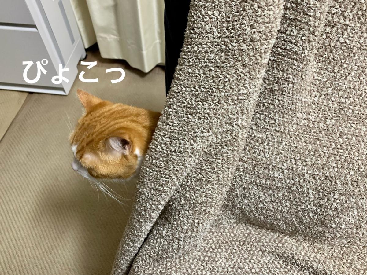 ソファの中に潜むるるちゃん5