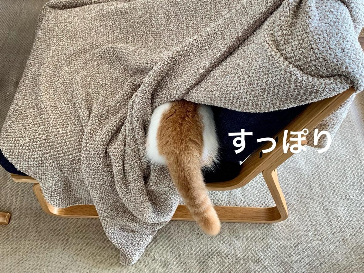 ソファの中に潜むるるちゃん2
