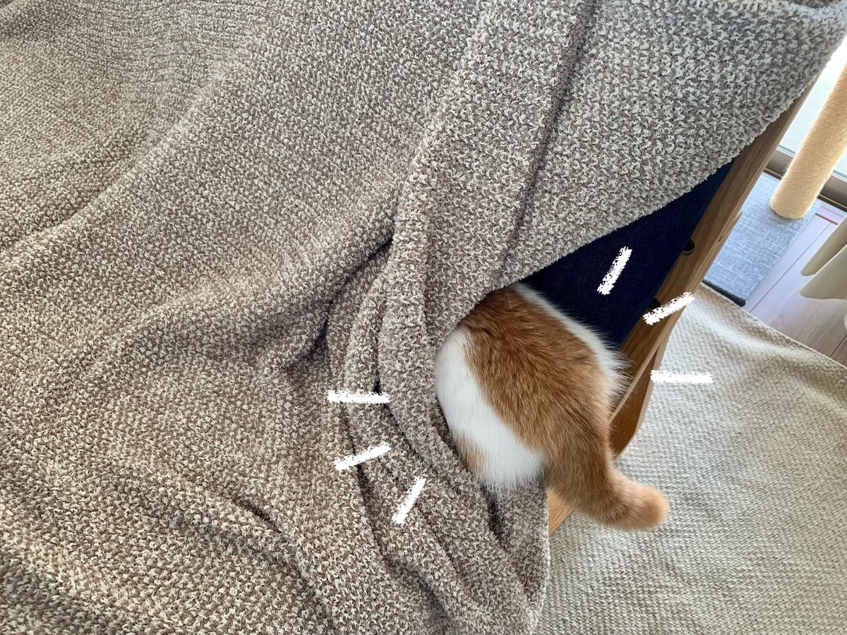 ソファの中に潜むるるちゃん3
