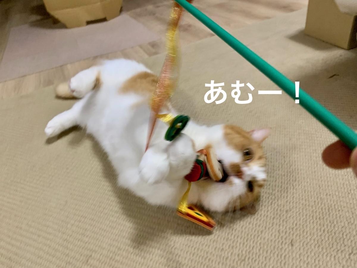 awesome storeの猫じゃらしで遊ぶるるちゃん1