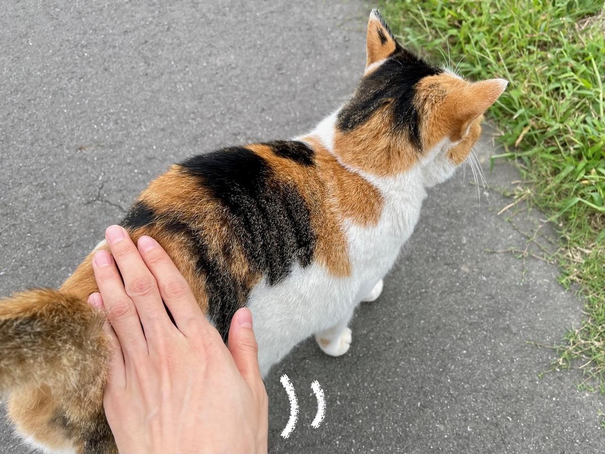 ジョギング中に出会った三毛猫さん