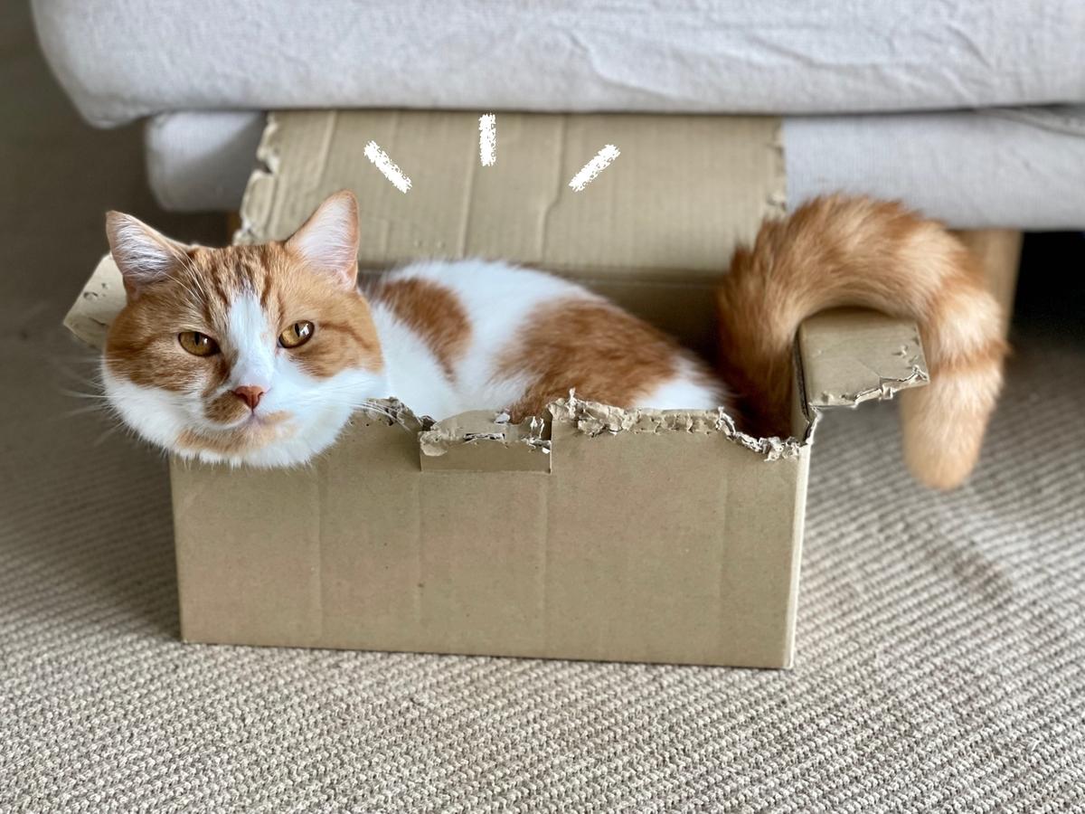 狭い箱におさまるるるちゃん1