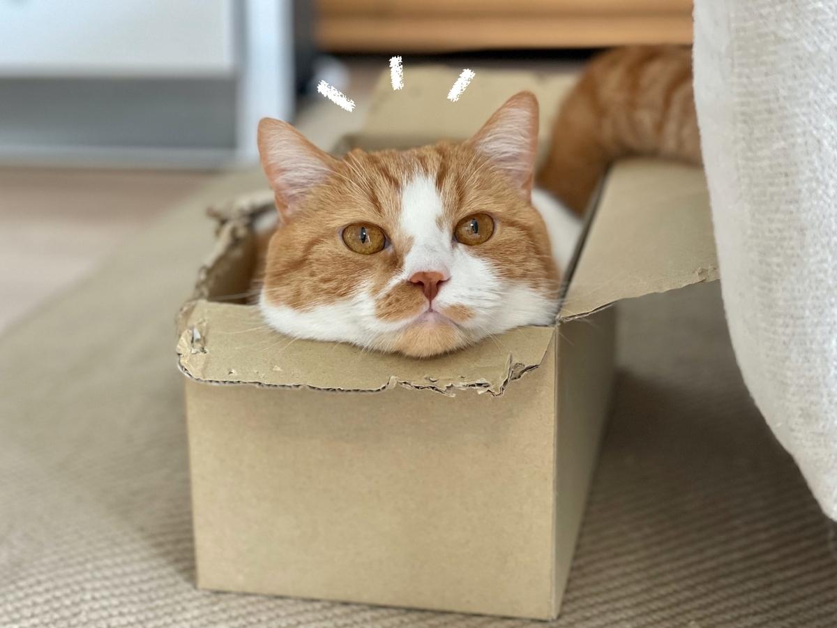 箱につまっているるるちゃん