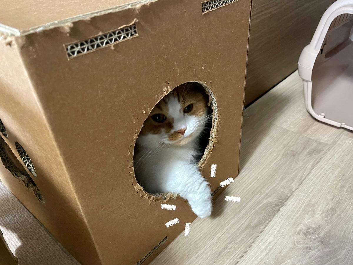 箱から手がでているるるちゃん1