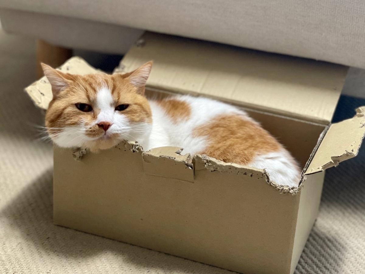 箱にすっぽり入り込んでいるるるちゃん