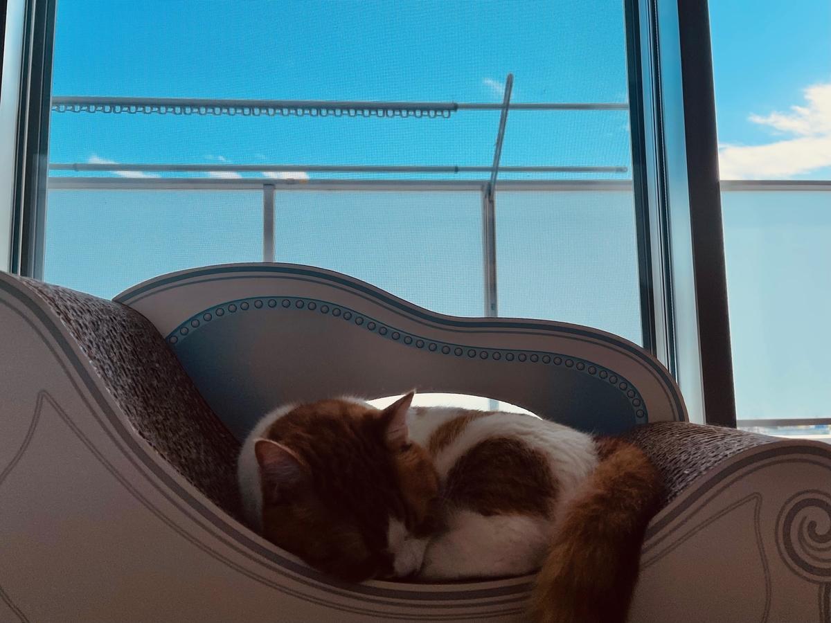 窓辺でお昼寝中のるるちゃん1